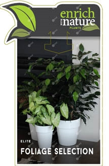 Elite Foliage Label Image etag.jpg
